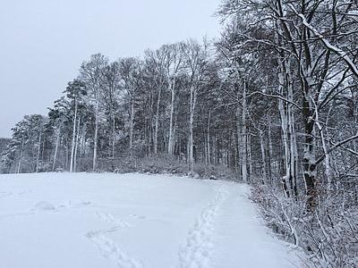 neve, Inverno, floresta, Branco, frio, paisagem, invernal