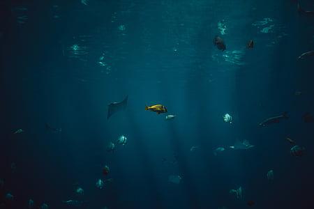 cá, thủy sản, động vật, Đại dương, dưới nước, màu xanh, nước
