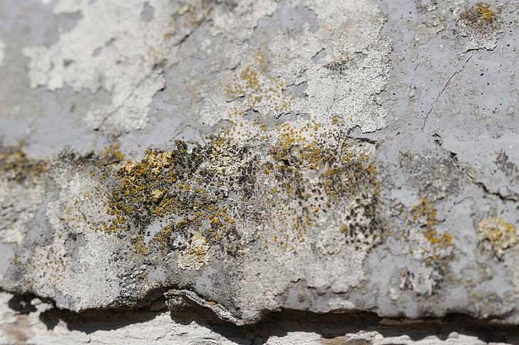 teixit, paret, vell, resistit, calç guix, façana, mur de pedra