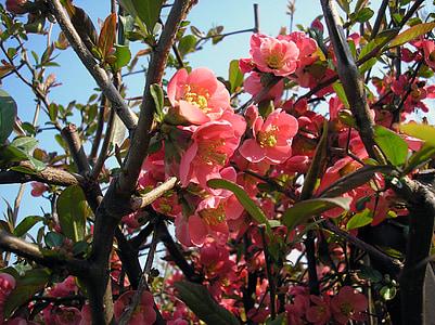 våren, blomst, vårblomster, vårblomst