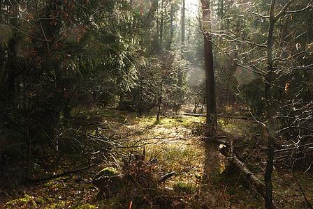 forest, glade, sun, rain, light, atmosphere, germany