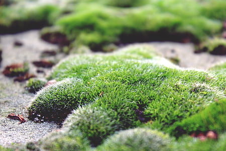 moss, ground, stone floor, green, nature, autumn, plant
