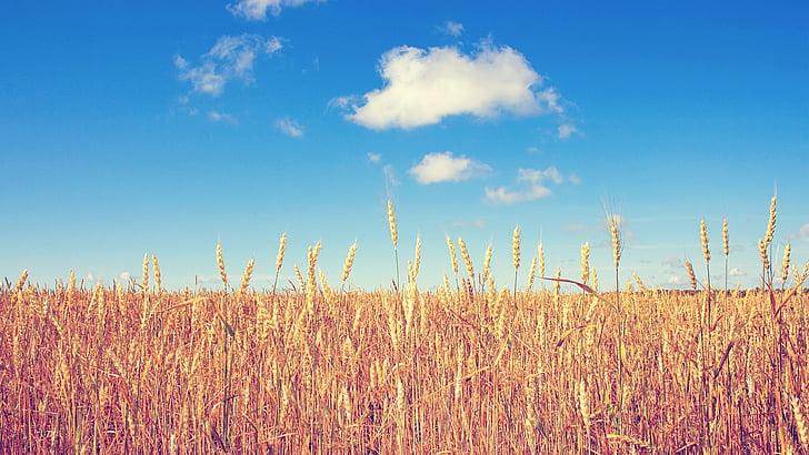 el paisatge, altiplà, núvols, natura, l'agricultura, l'estiu, cel