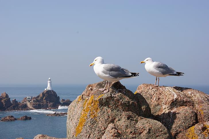 lokkien, Rocks, Linnut, lokki, lintu, Sea, Luonto