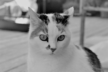 cat, white, animal, pet, cat's eyes, cat face, cat portrait