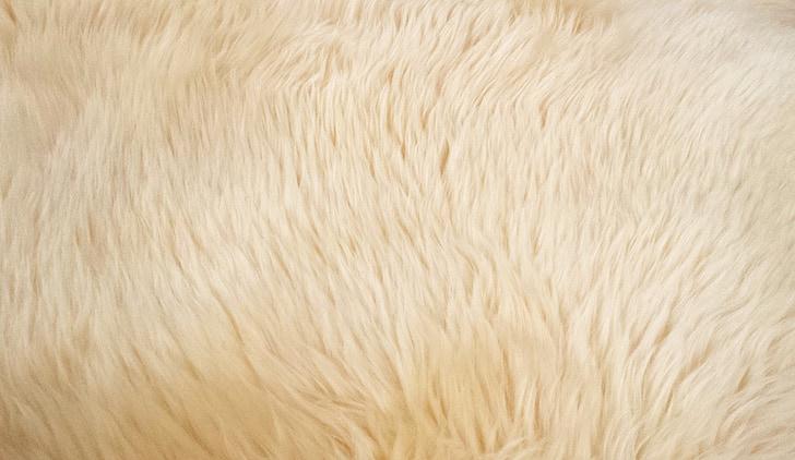 goat hair, fur, animal, texture, nature, carpet, backgrounds