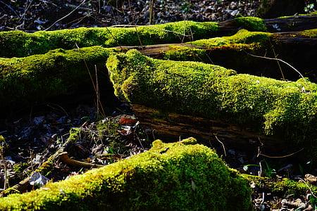 moss, forest, tree trunks, bemoost, green, tree stump, mystical