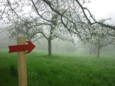 al matí, boira, natura, Direcció, estat d'ànim, arbres fruiters, paisatge