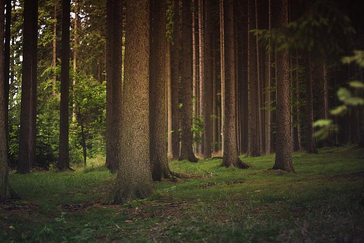 bosc, troncs d'arbre, arbres, boscos, natura, tronc d'arbre, arbre