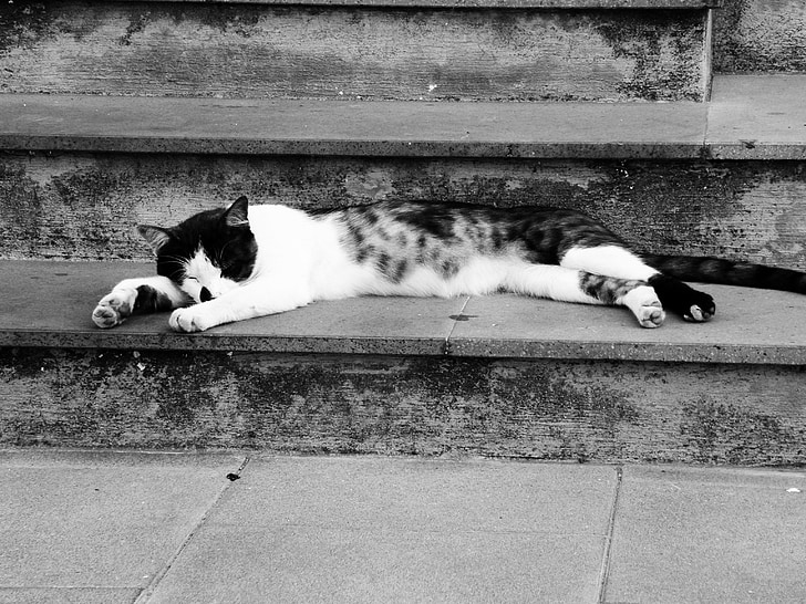 cat, feline, cat's eye, black and white cat, cat face, sleeping cat