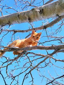 猫, ツリー, かわいい猫, 小さな, 毛皮, 足, 再生