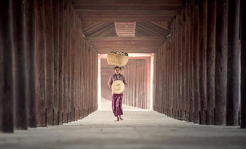 ngoài trời, hạt giống lúa, thịnh vượng, mùa thu, tour du lịch, Tanaka, thực hiện