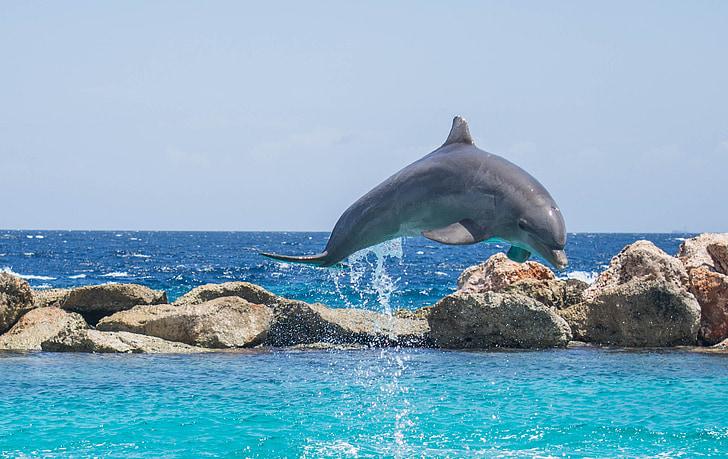 Dofí, Aquari, saltant, peix, animal, oceà, l'aigua