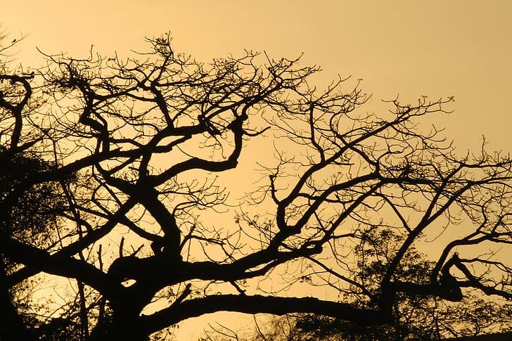 medis, medžio siluetas, foninis apšvietimas, Gamta, siluetas, kraštovaizdžio, Saulėlydis