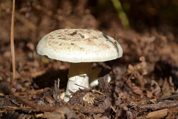 toad, stool, woodland