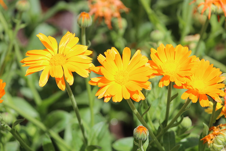 kollane lill, lill, kollane, lilled, loodus, kroonlehed, kevadel