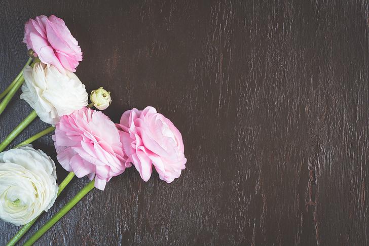 ranunkeln, rožinė, balta, gėlės, gėlių fonas, fono, Pavasario gėlės