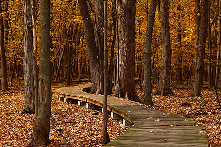 upadek, pozostawia, Szlak, liści, jesienny liść, martwy liść, Natura