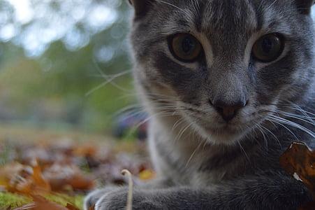 cat, animal, feline
