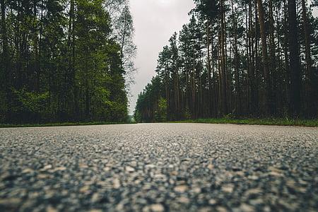 Zelená, stromy, rastlín, Príroda, Forest, cestné, Ulica