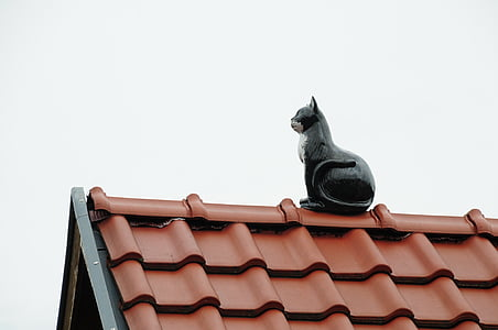roof, home, roofing, red, gable, cat, architecture