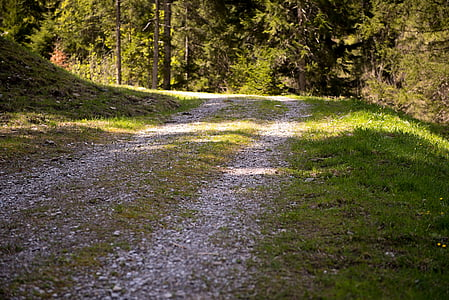 away, nature trail, forest road, forest, light and shadow, nature, landscape