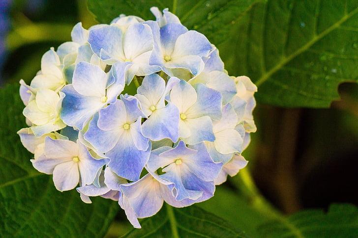 flors, flor, natura