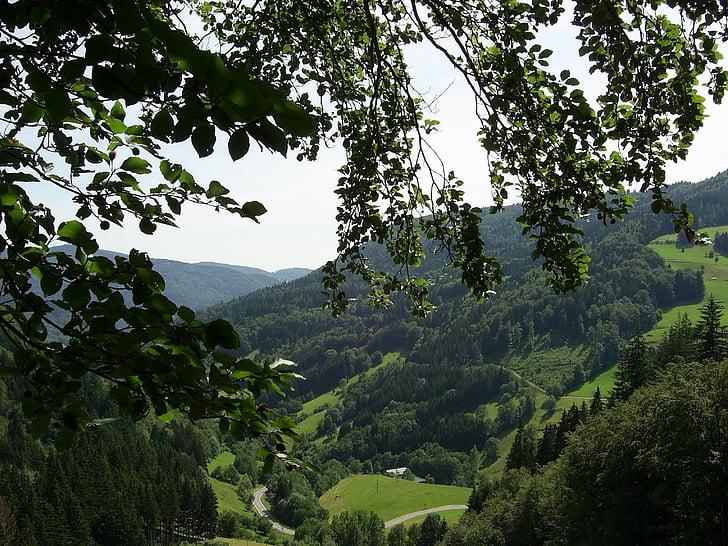 Schwarzwald, bjerge, skov, dalen, landskab, Firs, træer