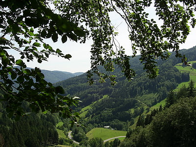 black forest, mountains, forest, valley, landscape, firs, trees