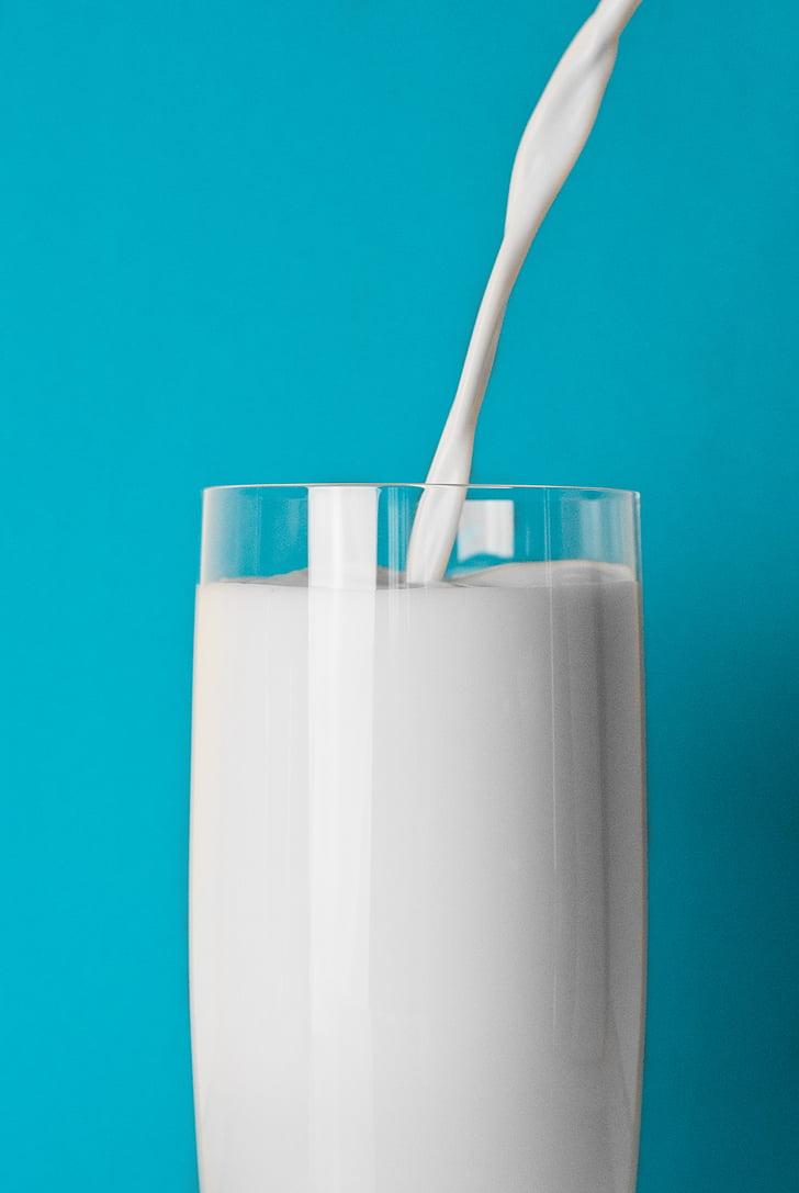 kauss, piepildīja, piens, stikls, dzēriens, krāsainu fonu, studijas pameta