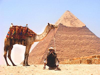 lạc đà, sa mạc, kim tự tháp, Trung Đông, Cát, động vật, mọi người