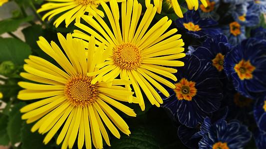 çiçek, çiçekler, bitki, kompozisyon, buket, doğa, Dekoratif çiçek