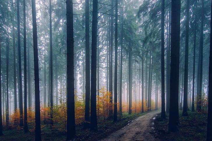 maastik, Scenic, sügisel, Sügis, metsa, puud, metsas