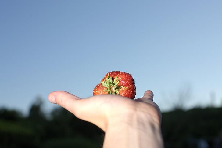 maduixa, gran, menjar, fruita, verdures, créixer, Bio