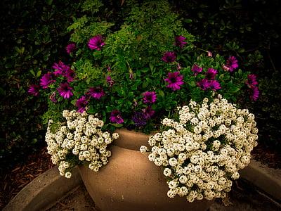 Bloom, Flora, fiore, fiori, giardino, foglie, petali di