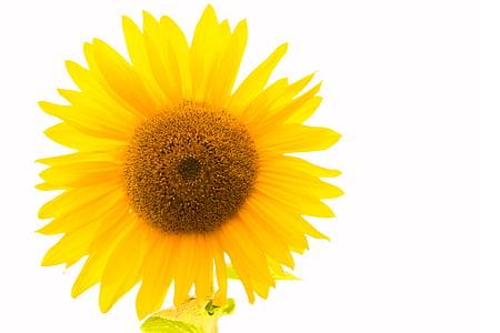 Sun flower, kollane, lill, kollane lill, õis, Bloom, loodus