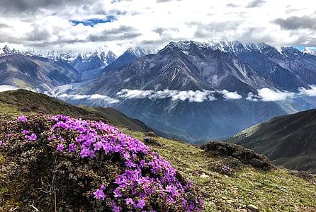 muntanya de neu de Gongga, núvol, a peu, muntanyenc, flor, pas sub-mei