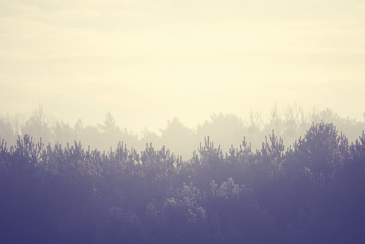 trees, landscape, forest, mist, fog, season, mystic