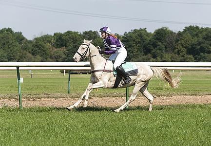 passeig, horsewoman, poder de la dona, Autòdrom magdeburg, cavall, esport, curses de cavalls