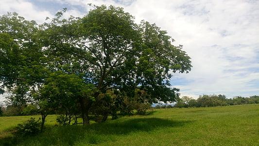 field, tree, environment