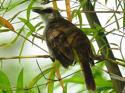 bird, sitting, branch, resting