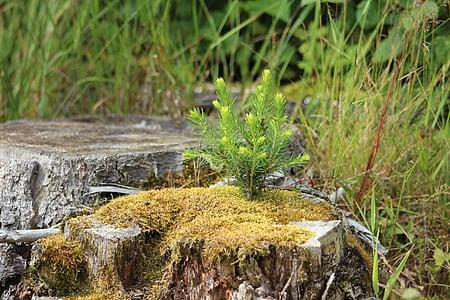 forest, log, tree stump, moss, fir, young, nature