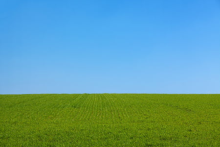 background, blue, clean, clear, day, field, dom