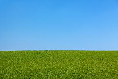 pozadie, modrá, čisté, Vymazať, deň, pole, dom