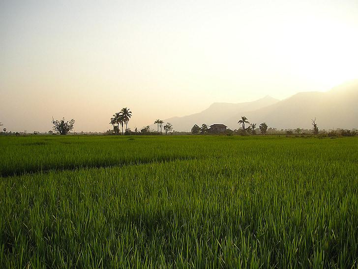 Laos, campos de arroz, arroz, plantaciones de arroz, plantaciones de, sureste, Asia
