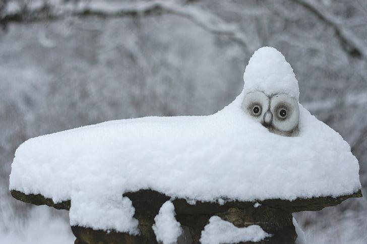 lumi, Pöllö, talvi, Tunturipöllö, valkoinen, sisustus, luminen