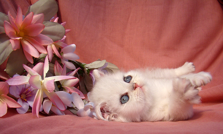 gatito, gato, myš, disfrutar de, hermosa