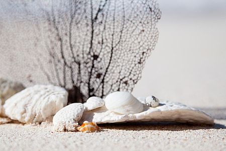 exotic, summer, concept, caribbean, beauty, nature, seashell