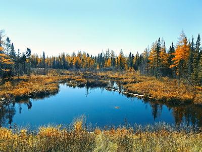 høst, myr, natur, skog, myr, våtmarksområde, vann