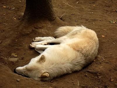 động vật, hươu, động vật, động vật có vú, sở thú, sói, không hoạt động
